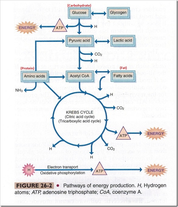 Pathways of energy production